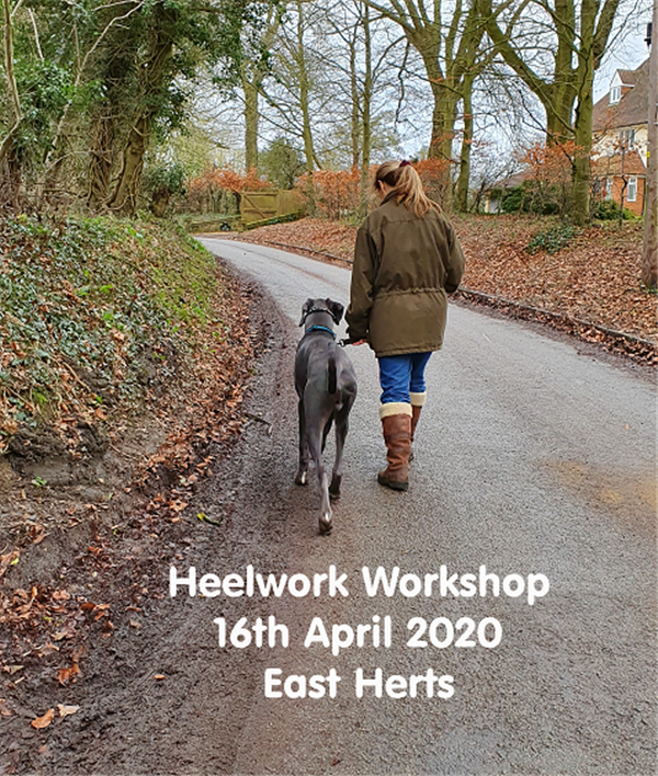 Heelwork Workshop  on Apr 16, 21:45@Stocking Pelham Playing Field - Buy tickets and Get information on pawsgalore.co.uk