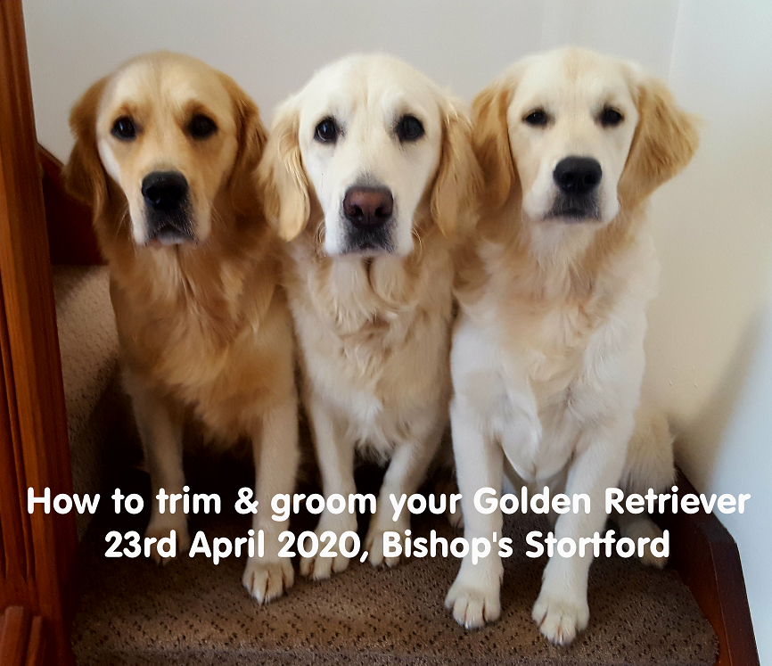 How to trim & groom your Golden Retriever  on Apr 23, 21:45@Bishop's Stortford - Buy tickets and Get information on pawsgalore.co.uk