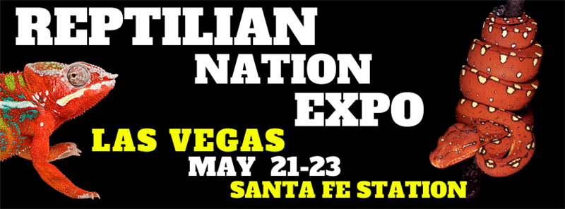 Get Information and buy tickets to REPTILIAN NATION EXPO - LAS VEGAS  on Reptilian Nation Expo