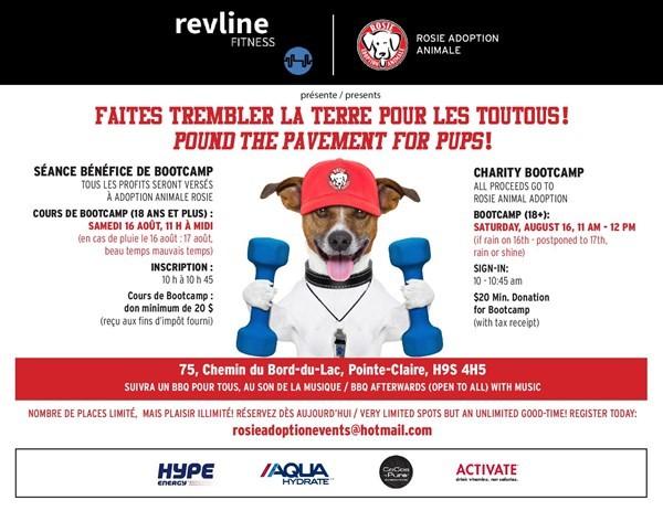 Get Information and buy tickets to Pound the Pavement for Pups Faites trembler la terre pour les toutous on Rosie Animal Adoption